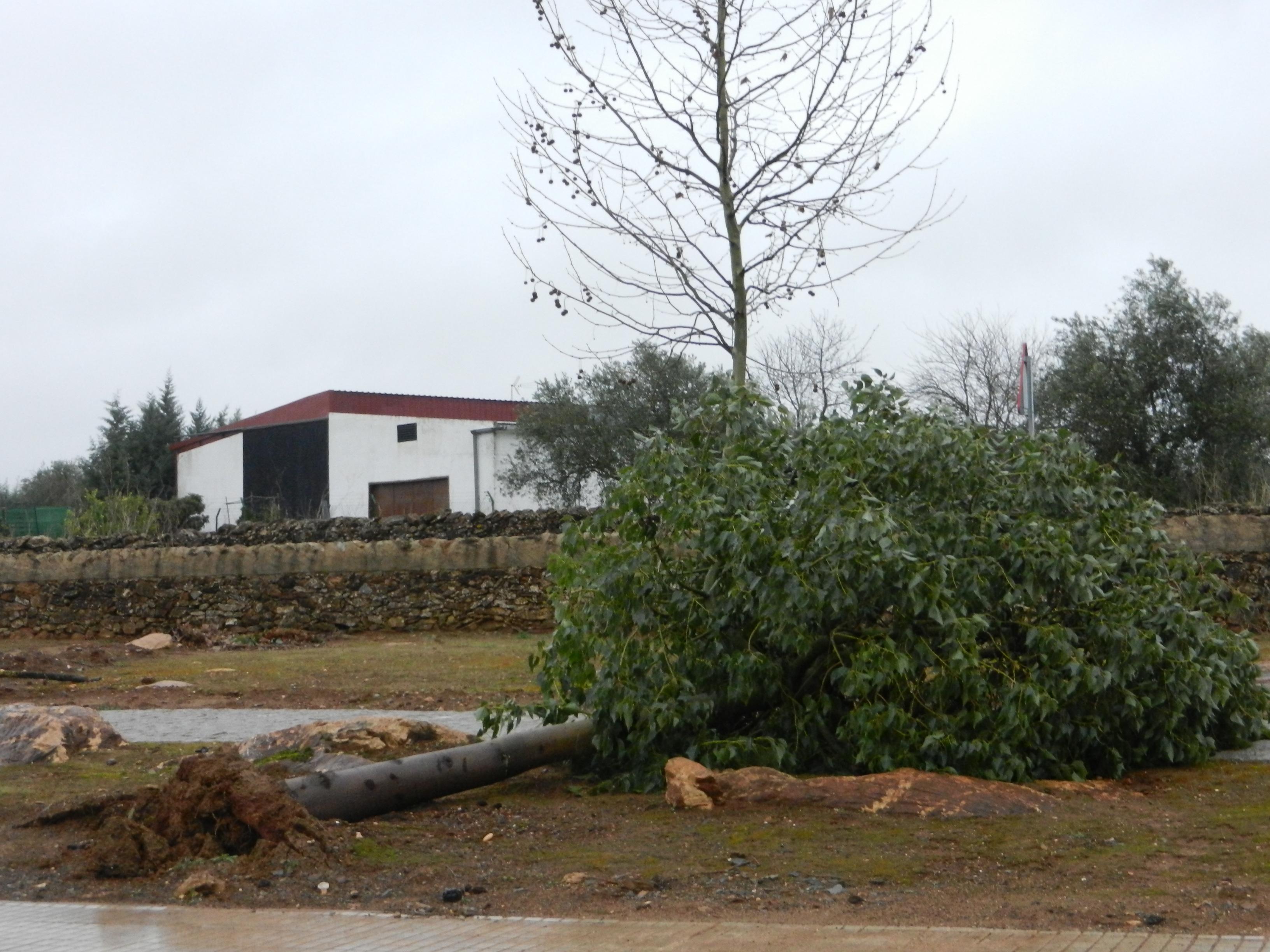 El temporal deja fuertes vientos y desperfectos a su paso por Olivenza
